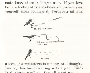 How Birds Live - CR Hill
