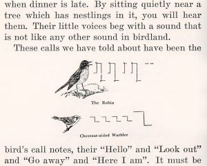 How Birds Live - CR Hill