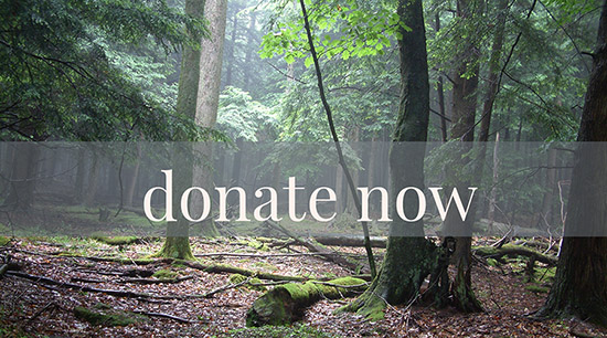 donate securely to the Cook Forest Conservancy, a 501(c)(3) nonprofit