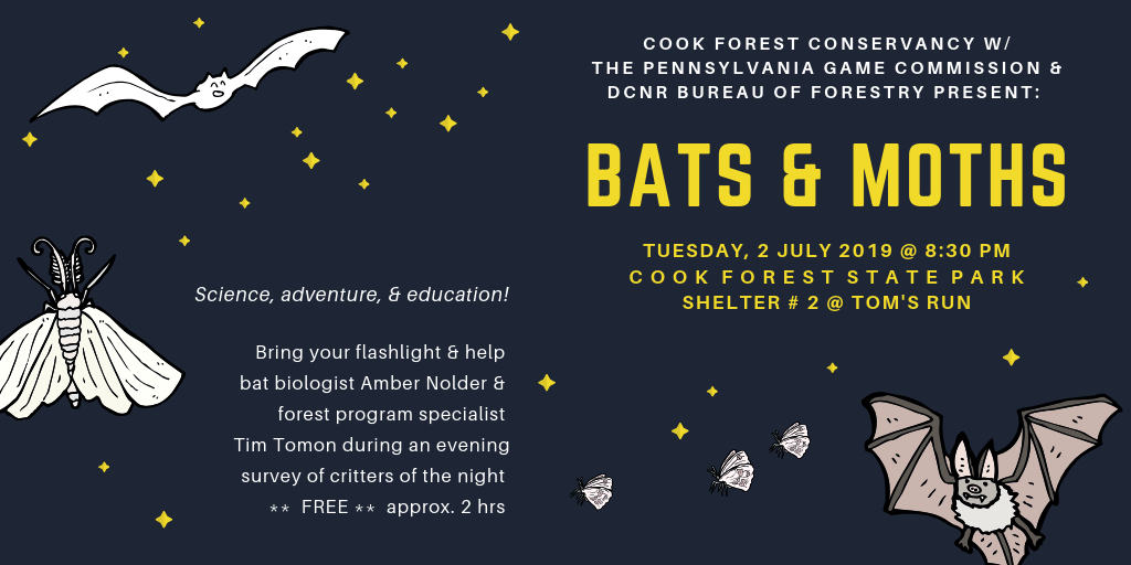 Bats & Moths of Cook Forest