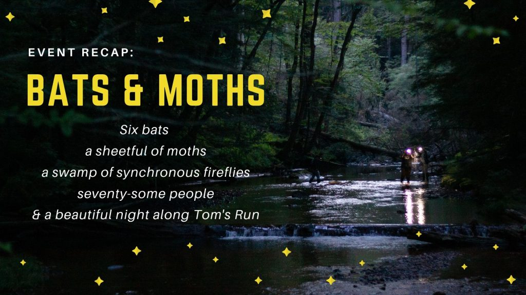Bats & Moths 2019 - Recap