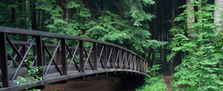 hemlocks over Cook Forest Longfellow Bridge