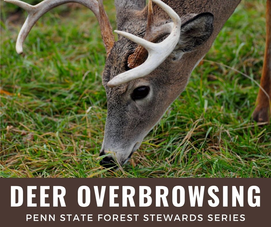 PAFS series - Dave Jackson on Deer Browse