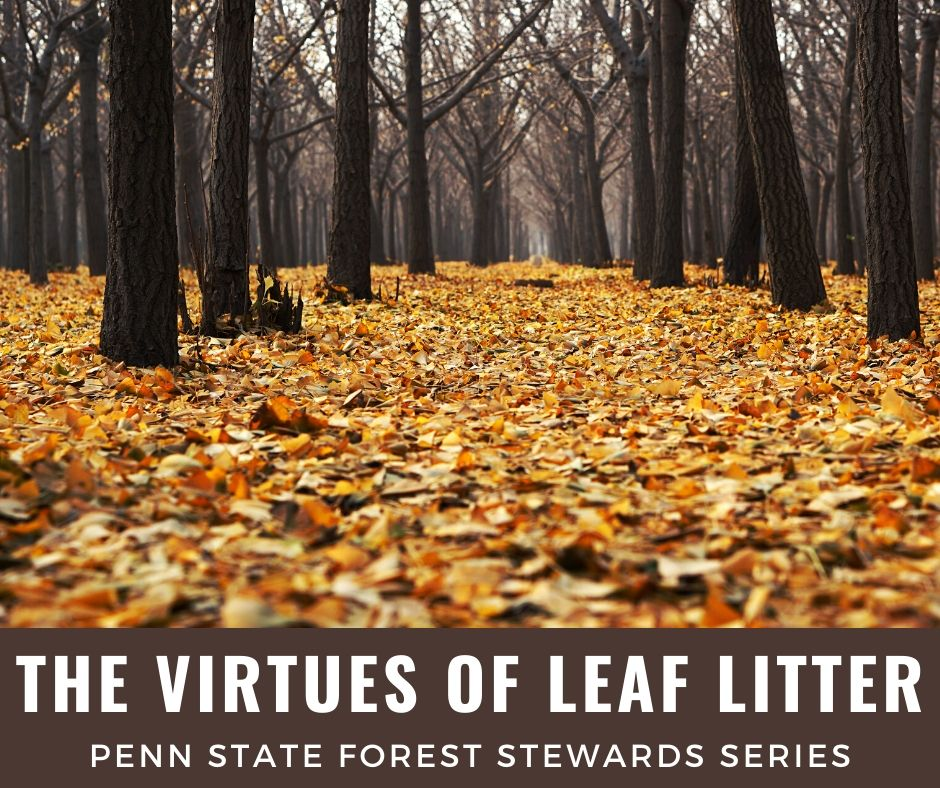 2019-11 PAFS article Jim Finley on leaf litter
