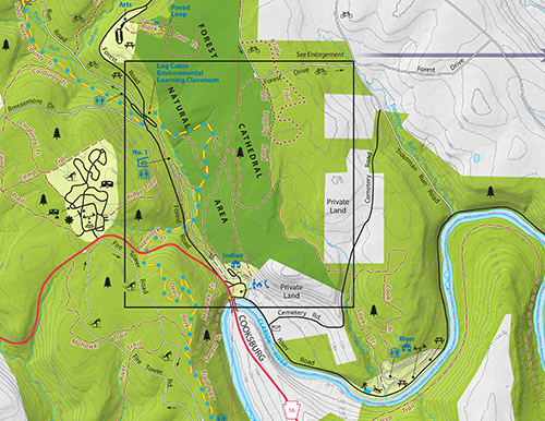 DCNR CFSP Cook Forest State Park Map Forest Cathedral