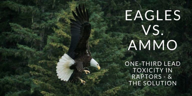 Cook Forest Conservancy - Lead Poisoning in Eagles from Ammunition