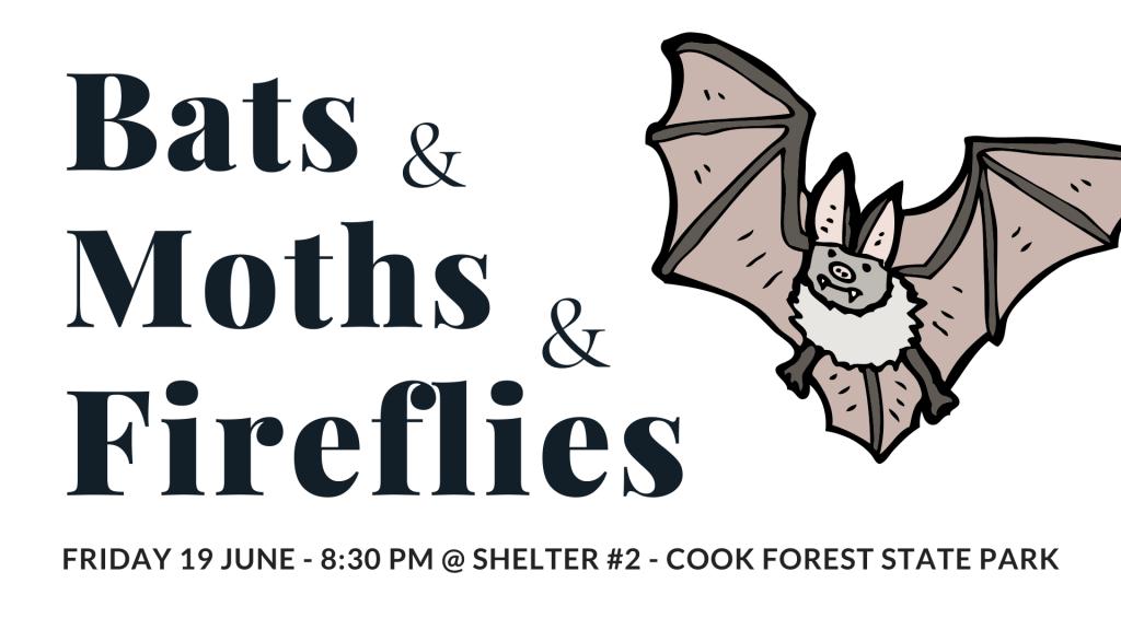 Bats Moths & Fireflies CFC 2020
