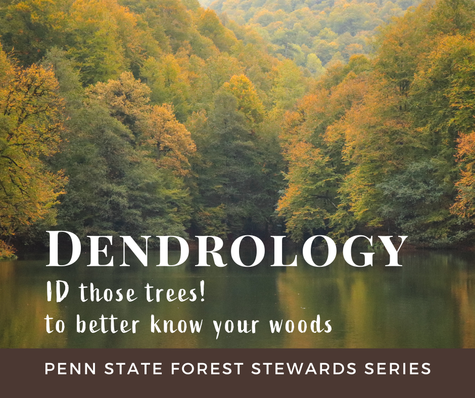 PAFS - Dendrology - identify forest trees